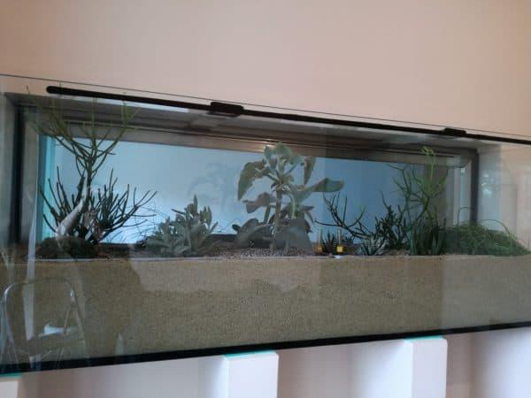 Aquarium begrünen Innenraumbegrünung