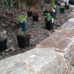 staudenbeet pflanzen