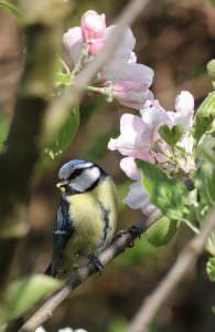 tierfreundlicher Garten Vögel