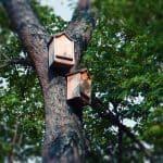Fledermaus Schlafkästen Naturgarten