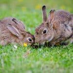 Naturgarten Hase Flaechenlust