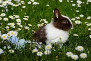 Naturgarten Hase Ostern