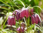 beetplanung Zwiebelpflanzen Flaechenlust