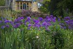 Allium Gartenplanung Flaechenlust