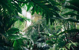 zimmerpflanze indoor garten flaechenlust
