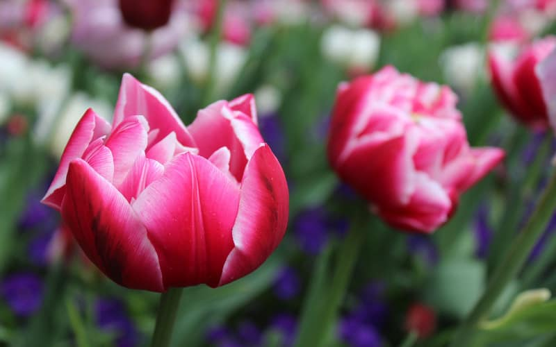 Gartentrend 2018 Messekalender