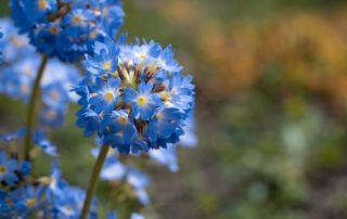 Garten im März Gartenblog