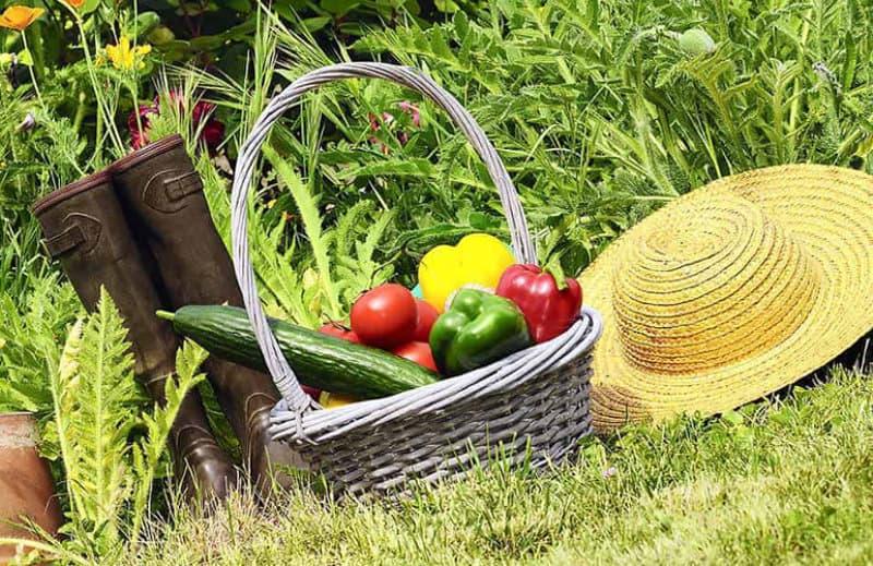 6 Gartentipps im April - Gemüsegarten Flaechenlust