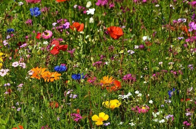 Blumenwiese Gartentipps Mai