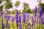 Bienenweide Gartentipps