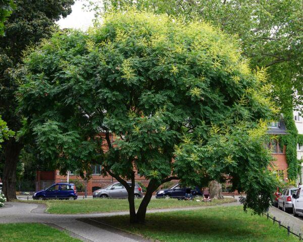 Klimawandel Baum