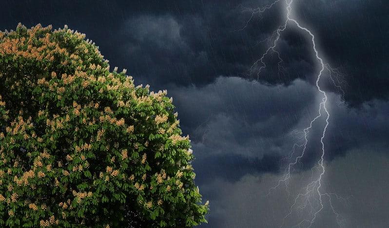 Klimawandel im Garten Flaechenlust