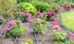 bewässerung tropfschlausch garten