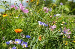 blumenwiese-naturwiese-naturgarten