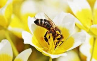 Naturgarten für Bienen