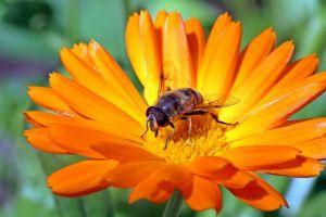 gartentipps im mai Sommerblumen