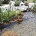 Regenerationsbereich im Teich