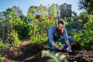 gartenberatung gemüsegarten urban gardening