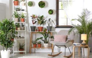 indoor garten zimmerpflanzen