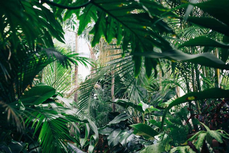 ausgefallene Zimmerpflanzen Flaechenlust Gartenblog