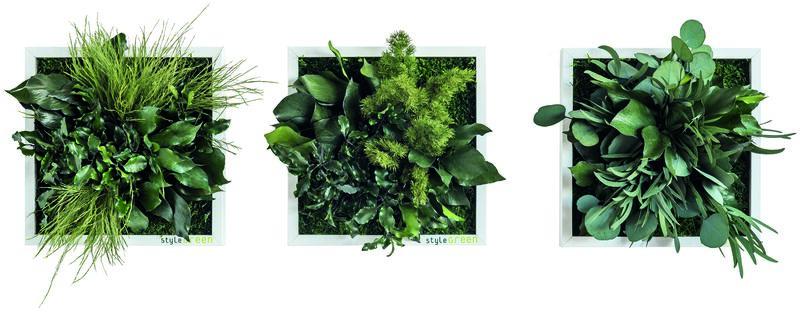 pflanzenbilder 3er set