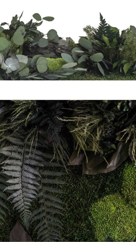 Pflanzenbild Nahaufnahme