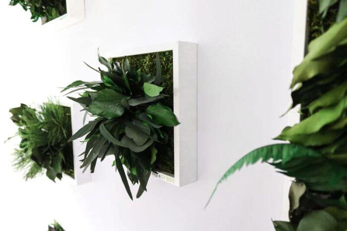 Set aus Moosbild mit Pflanzen