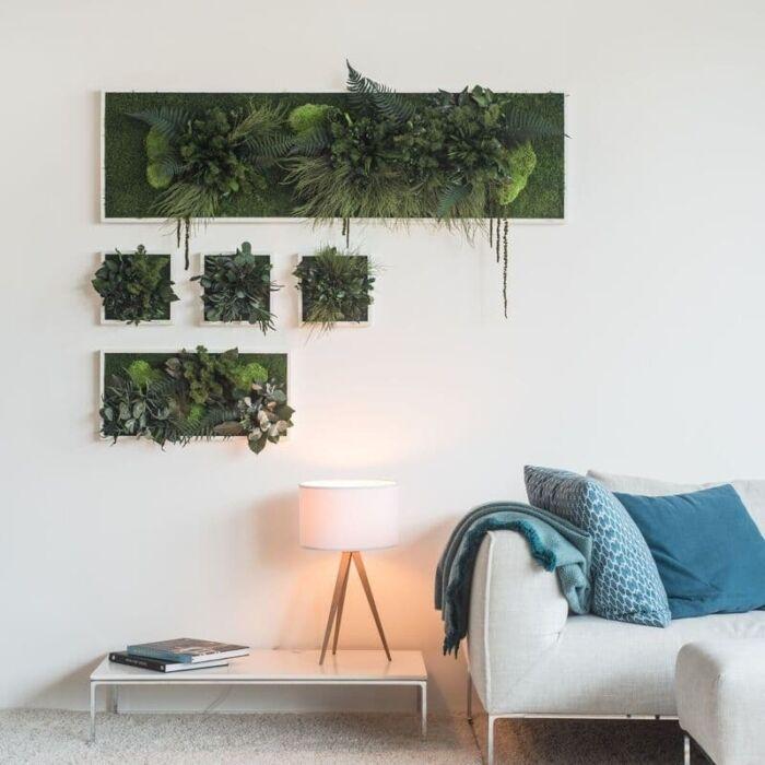 bild pflanzen
