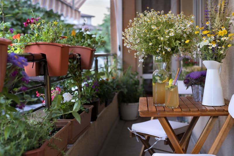 kräuter balkon kräuter pflanzen