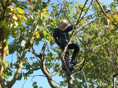 obstbaum garten umgestalten