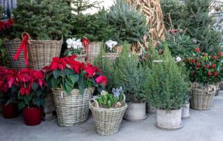 winterpflanzen balkon gartentipps
