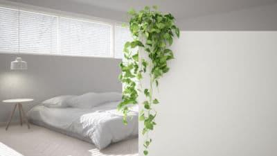 efeutute kletterpflanze schlafzimmer
