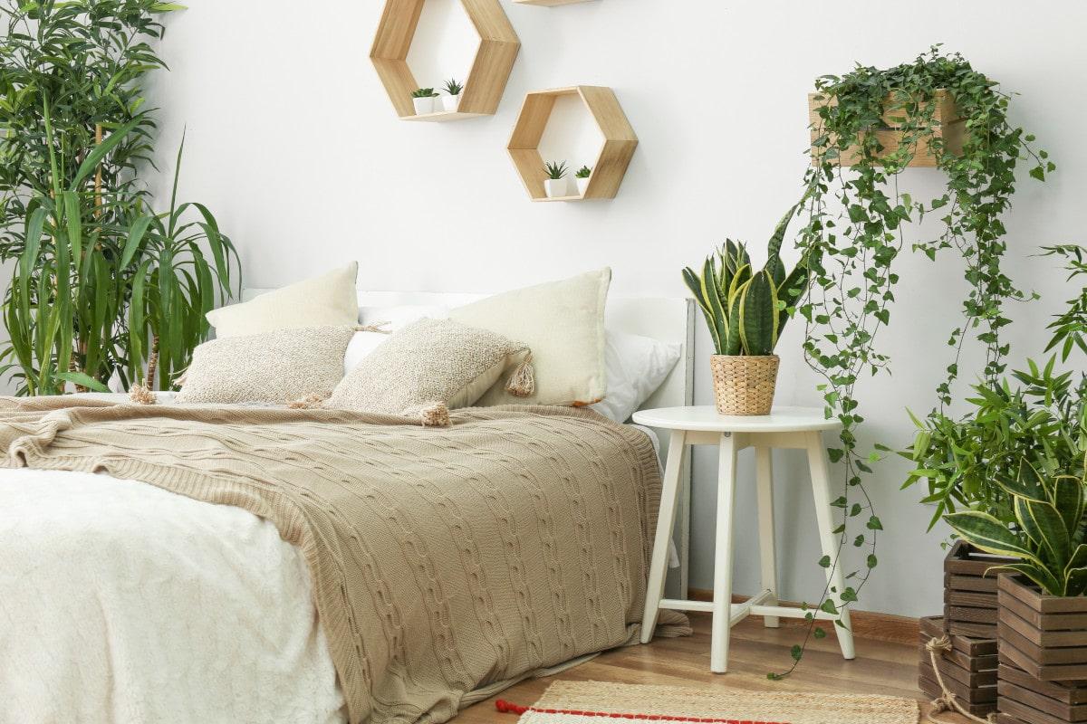 zimmerpflanzen schlafzimmer