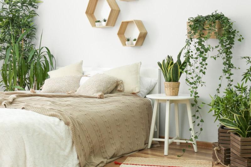 zimmerpflanzen gesunder schlaf